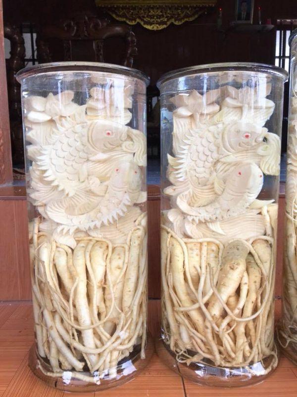 Cá chép - Bình 19 lít - Đinh lăng điêu khắc