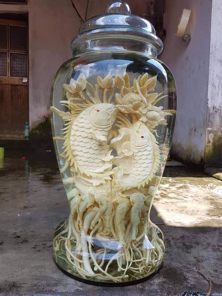 Cá chép - Bình 25 lít - Đinh lăng điêu khắc