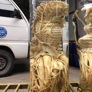 Cá chép hóa rồng - Bình 12 lít - Đinh lăng điêu khắc