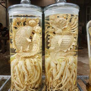 Cá chép hóa rồng - Bình 19 lít - Đinh lăng điêu khắc