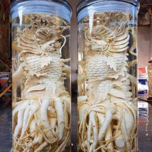 Cá chép hóa rồng - Bình 25 lít - Đinh lăng điêu khắc