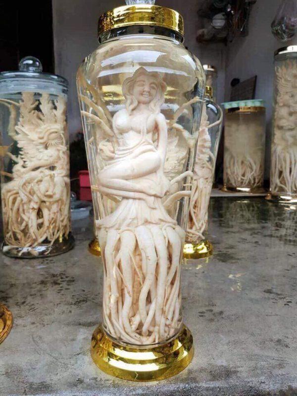 Tiên cá - Đinh lăng điêu khắc - Bình 7 lít