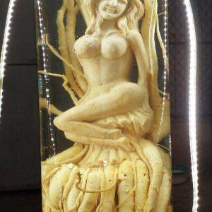 Tiên cá - Đinh lăng điêu khắc - Bình 19 lít